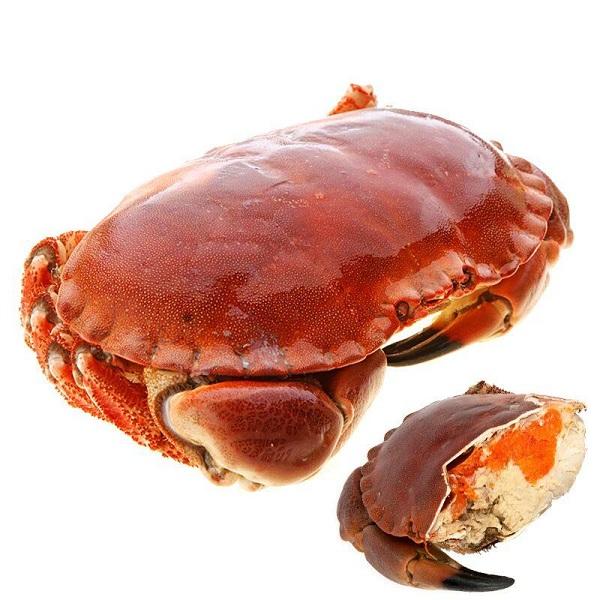 面包蟹1.jpg